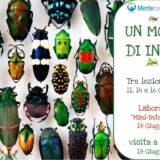 un mondo di insetti laboratorio entomologia plusdotati jeferson stellari